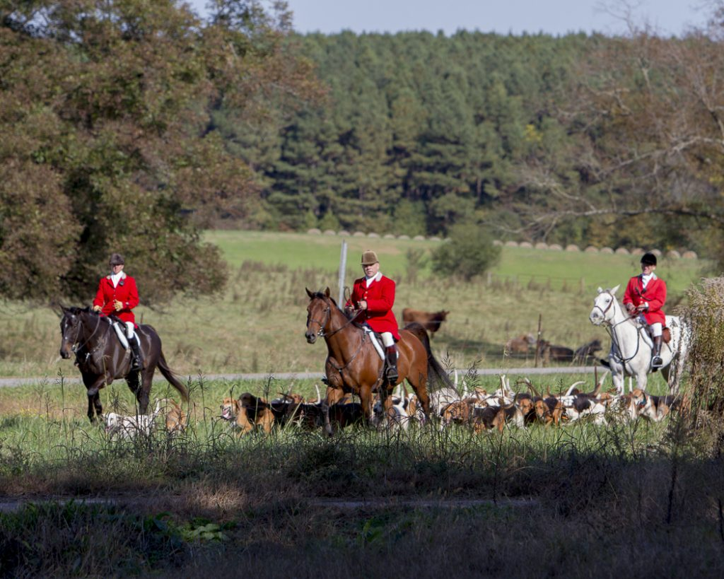 Shakerag Hounds fox hunt