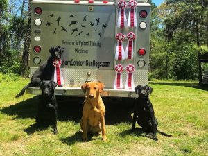 Southern Comfort Gun Dogs – Horse Hound and Hunt