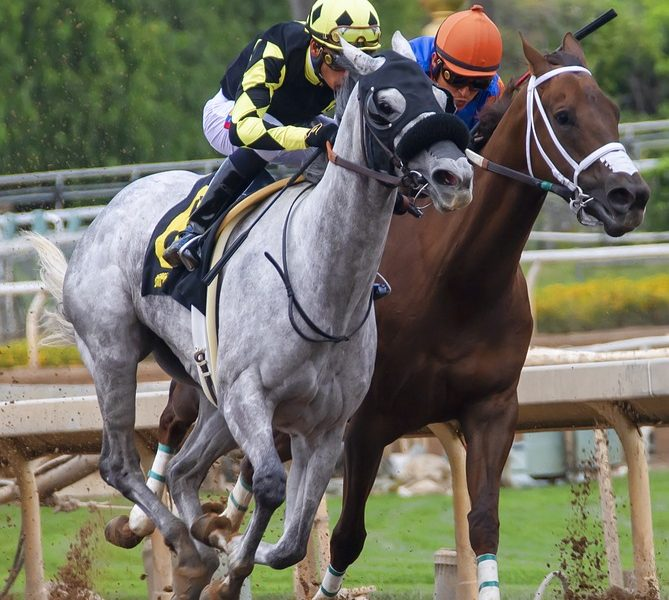 Thoroughbreds on Track - Fractional Ownership may allow you to have your own racehorse!