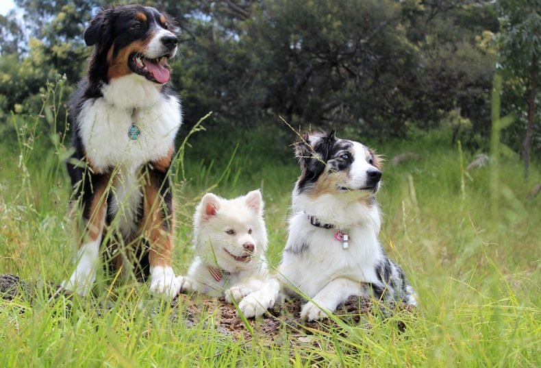 Celebrate the dog days of summer and National Dog Day at Barnsley Gardens