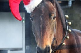 Deck the Stalls Horse in a Santa Hat
